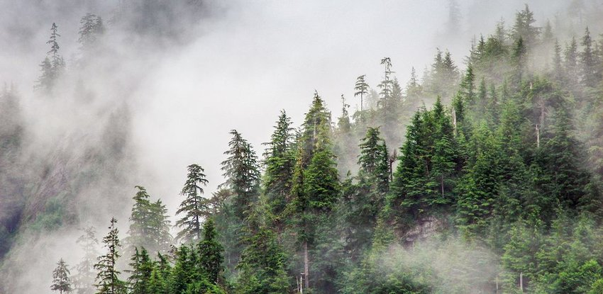 7 Largest Forests in the World
