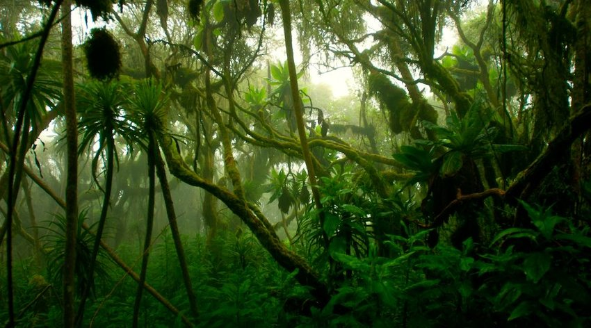 Rainforests Have Very Little Light