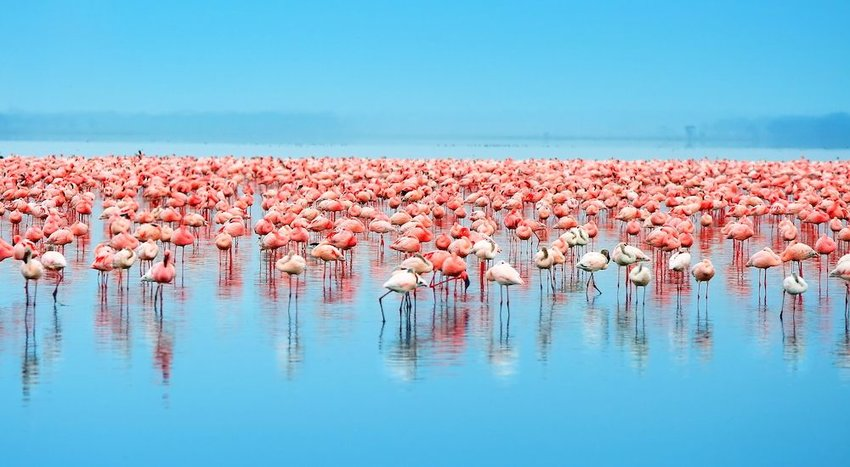 Lake Nakuru National Park, Kenya