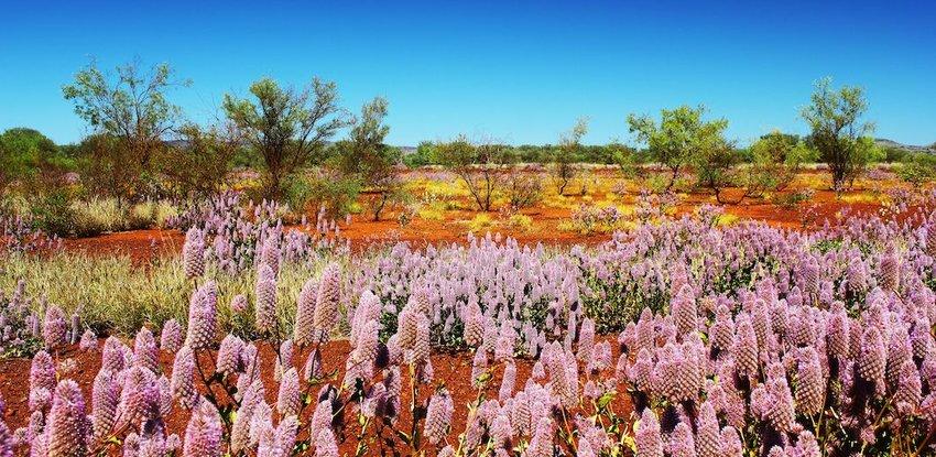 The Desert Is Covered in Vegetation