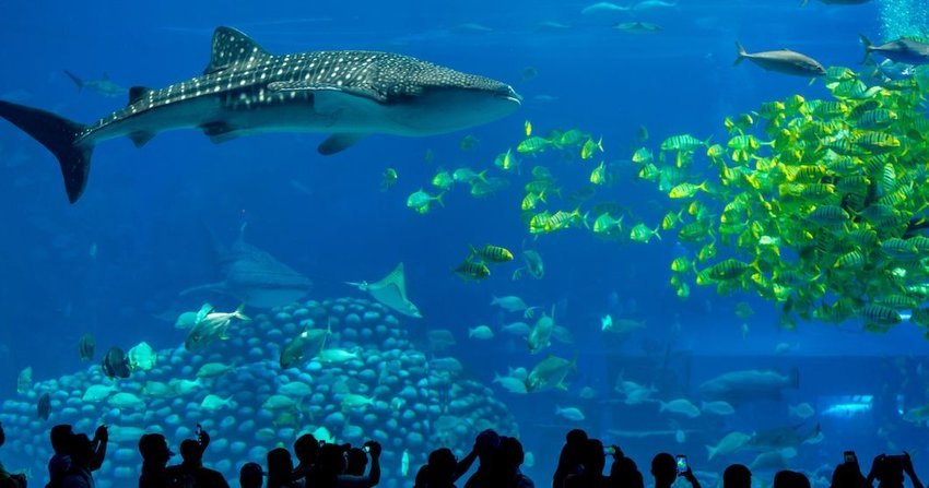 5 Things to See at the World's Largest Aquarium