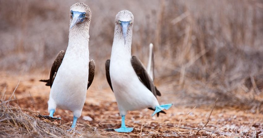 3 Exotic Animals You Can Only See in the Galapagos