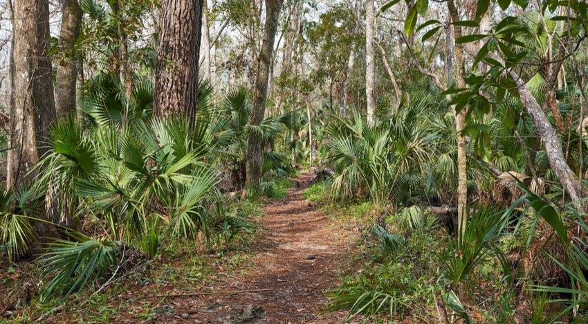 Florida Trail, 1,400 miles