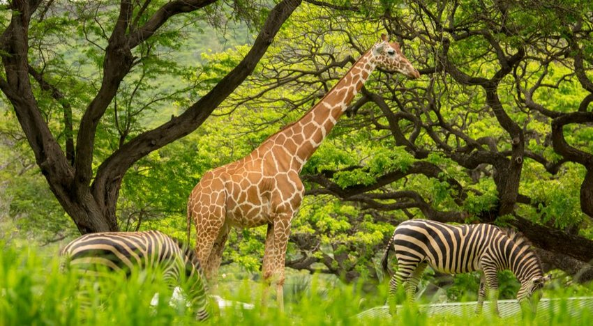 5 Largest Zoos in the World