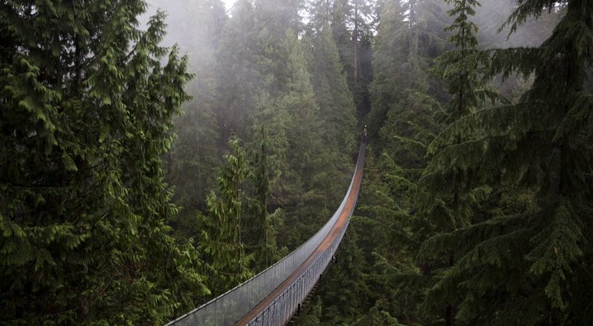 6 Bridges Only the Bravest Travelers Would Cross