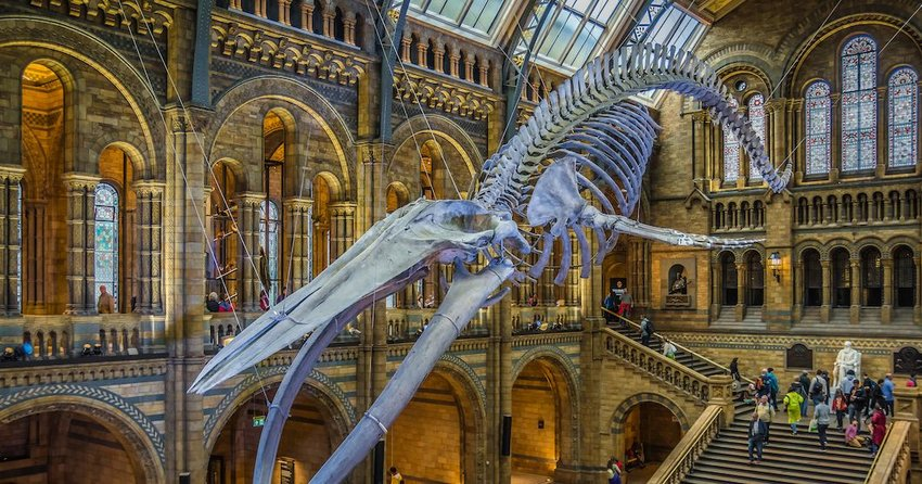 3 Best Free Attractions in London