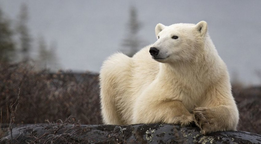 There Is a Polar Bear Prison