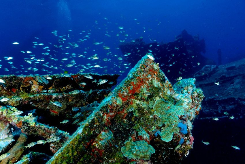 4 Sunken Ships Even Rookie Divers Can Explore
