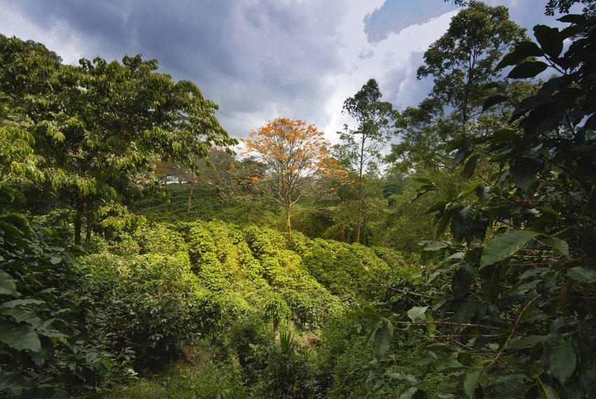 3 Most Prestigious Coffee Regions in the World
