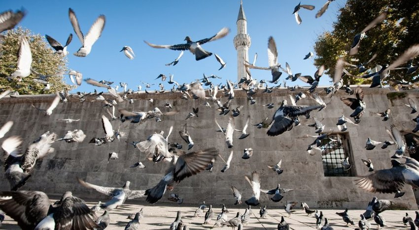 Pigeons flying in a plaza