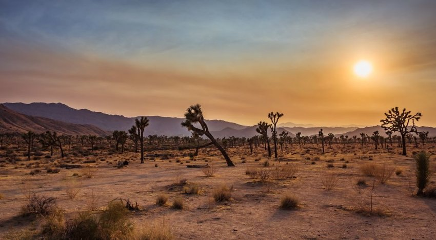 A desert landscape in Joshua Tree National Park
