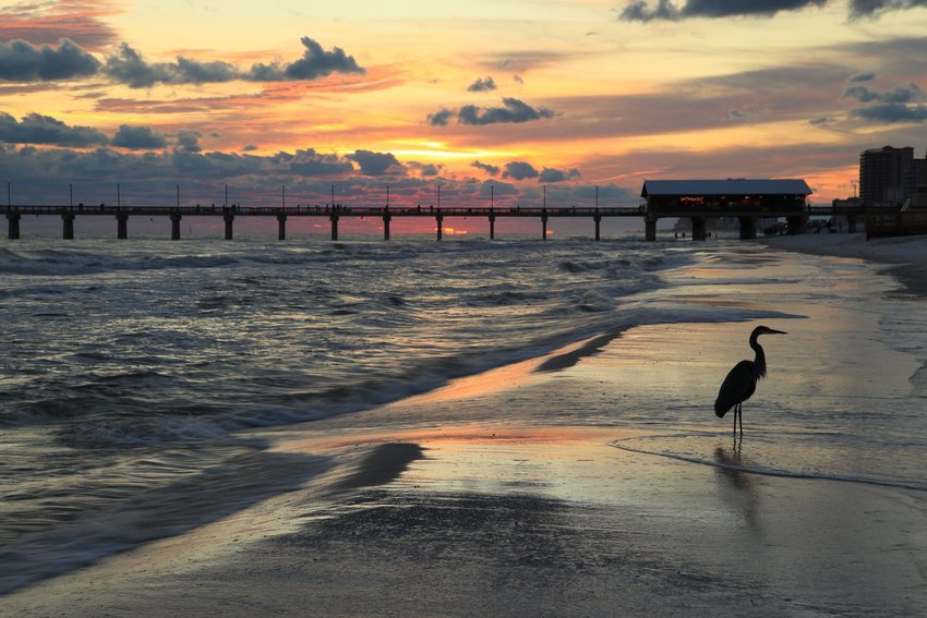Photo of a bird on a deserted beach