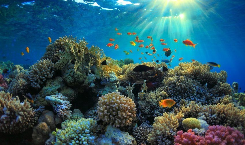 5 Largest Coral Reefs in the World