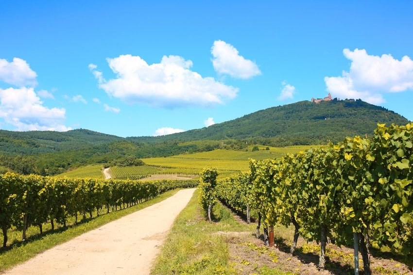 The Alsace Wine Route in France