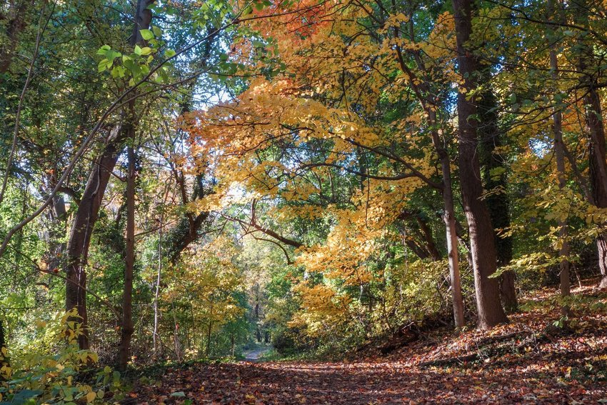 A leaf-covered path through the forests in Rock Creek Park
