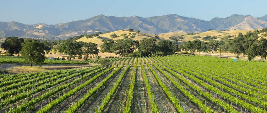 4 Best Wine Regions in the U.S.