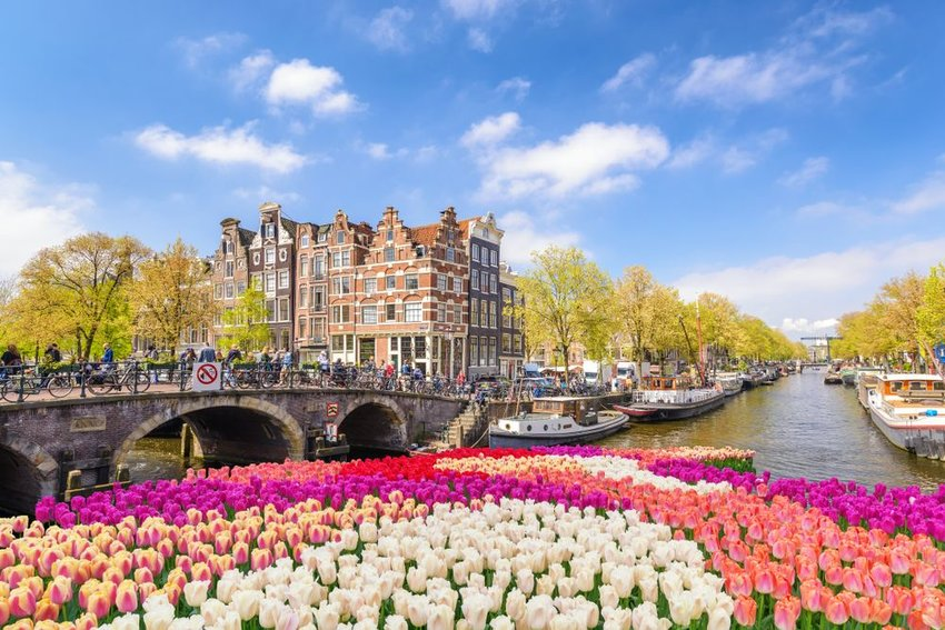 Bright tulips in front of the canal in Amsterdam