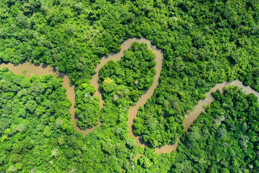 jungle river in the Congo