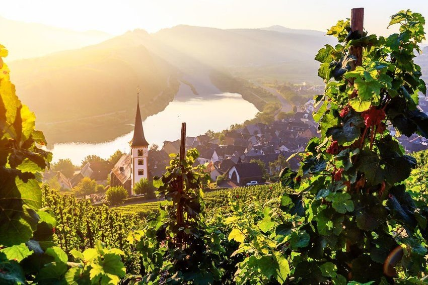8 Regions to Visit if You Love Wine