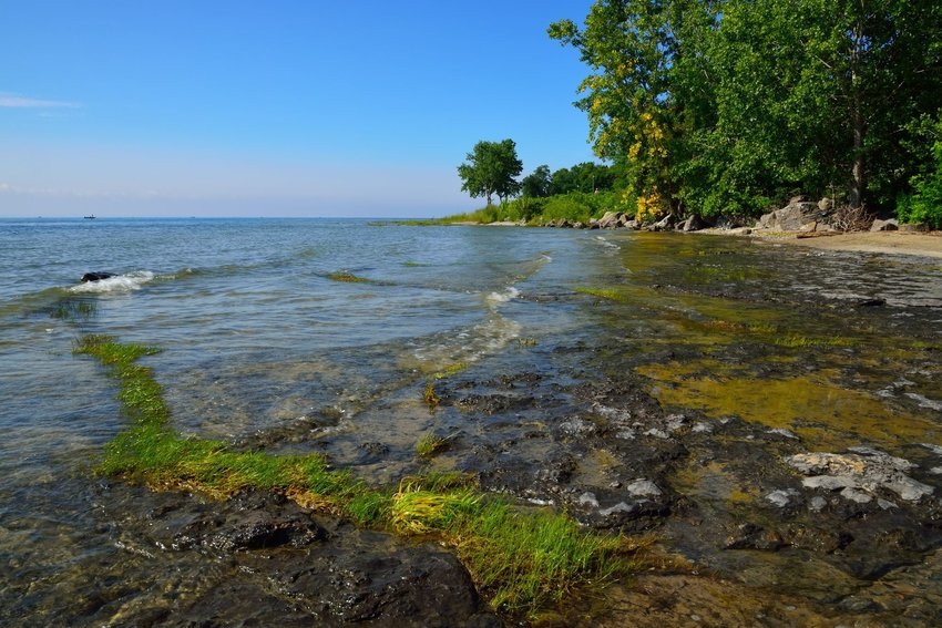 Close view of Lake Erie's surface near the shore