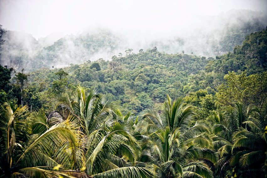 Foggy jungle mountains in Jamaica