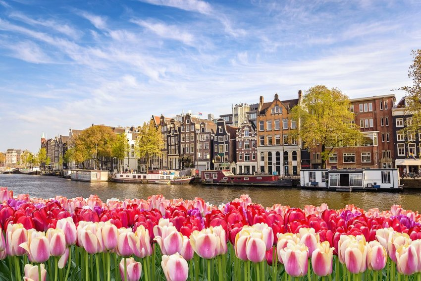 Amsterdam city skyline at canal waterfront with tulip flowers