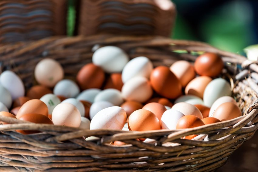 Eggs in a straw wicker basket on display at a farmers market in Pimlico, London