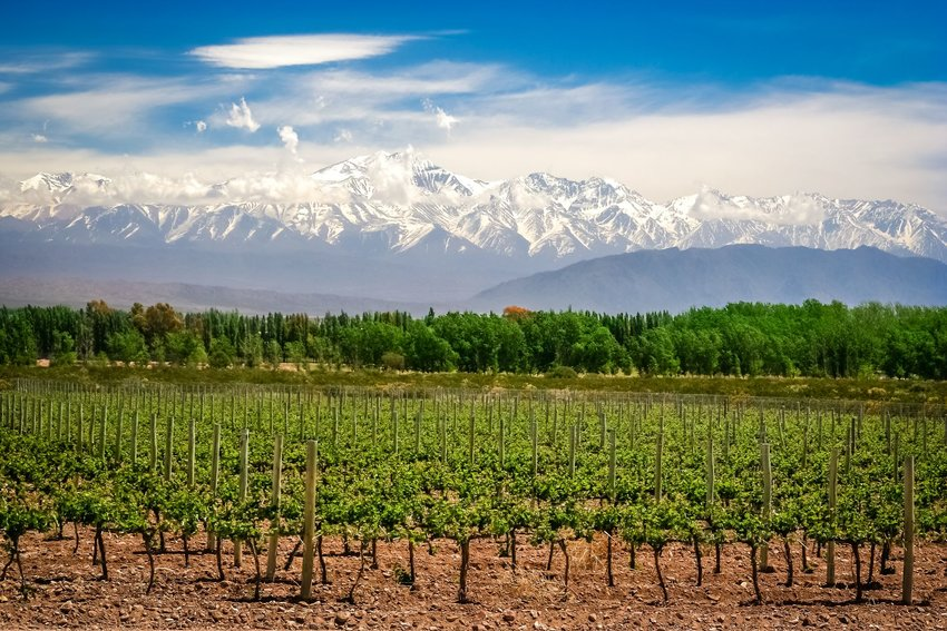 Organic vineyards near Mendoza in Argentina