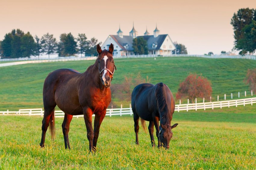 Horses in Lexington, Kentucky