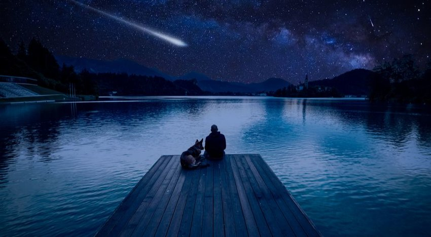 Man and his dog gazing at the Perseids meteor shower across the night sky