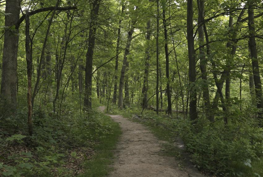 A dirt trail through trees in Theodore Wirth Regional Park