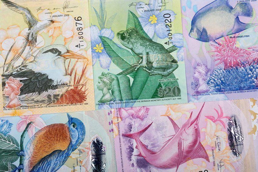 Close-up of animal drawings on Bermuda's banknotes