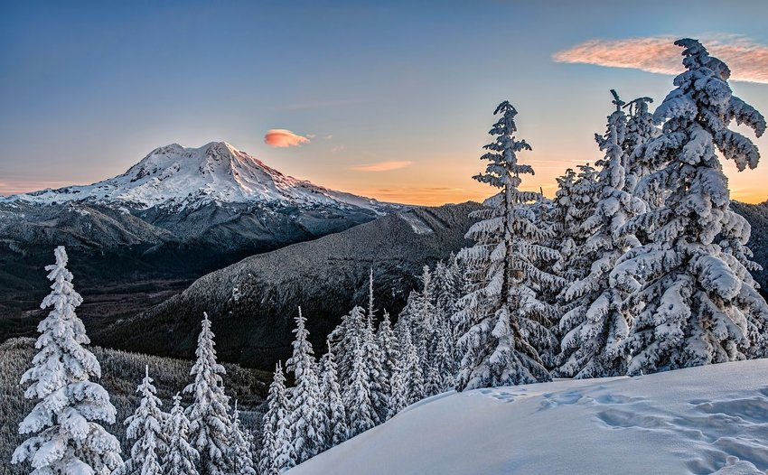 Snowshoe tracks and snow covered trees with a vista of Mount Rainier in the glow of the sunrise.