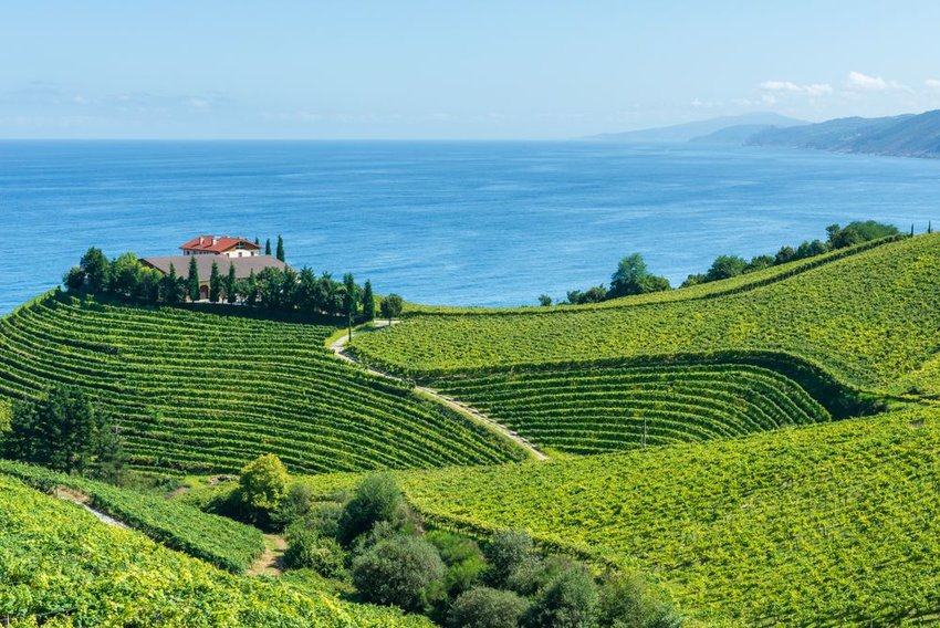 Vineyards with sea in background