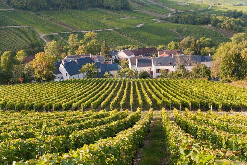 Vineyards in Sancerre