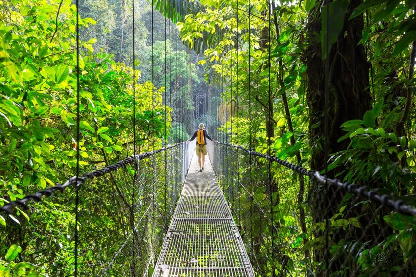 Person walking across suspended bridge in the jungle