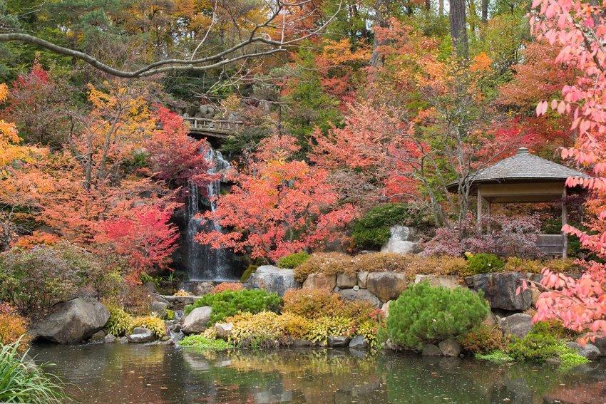 Fall foliage and waterfalls at Anderson Japanese Garden