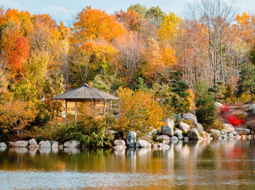 Landscape of the autumn landscape in the japanese gardens at the Frederik Meijer Gardens