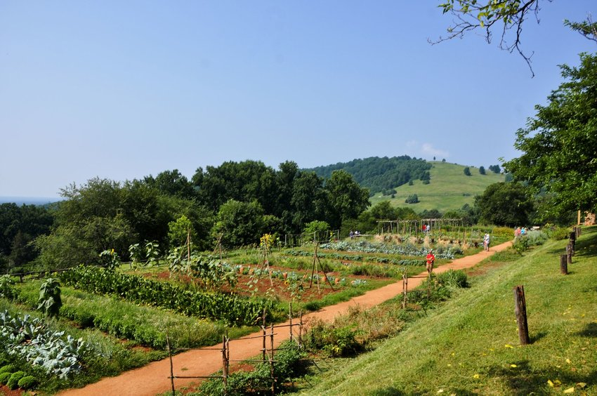 Jefferson's Monticello, a green and lush garden, among the hills of Virginia.