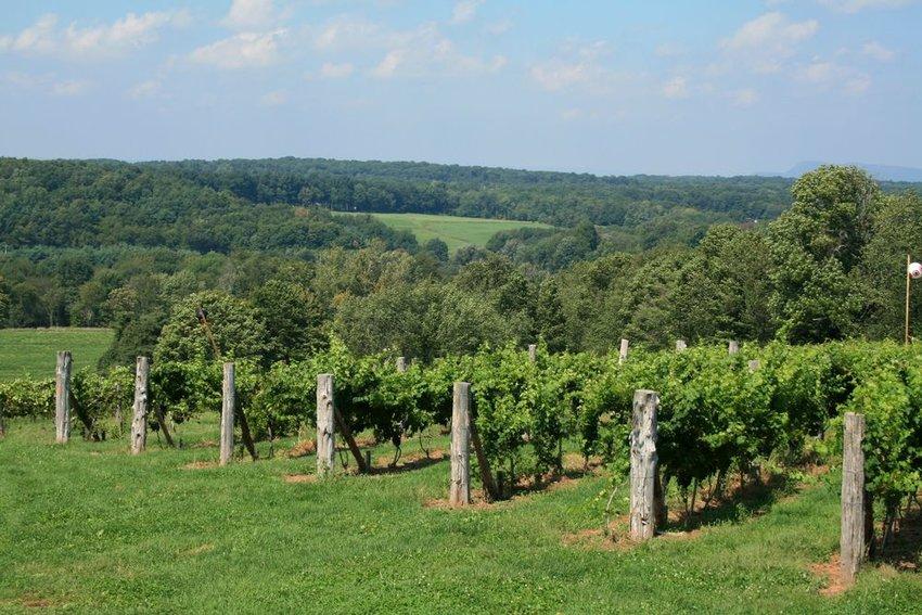 A vineyard in rolling hills