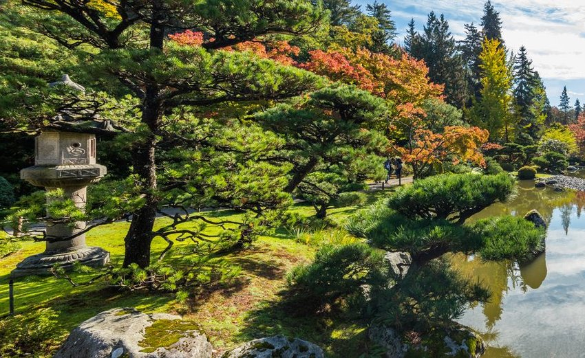 Bright autumn colors in the Seattle Japanese Garden