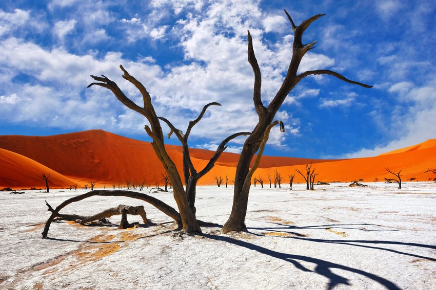 The surreal dead camelthorn trees among orange sand dunes in the Namibian desert