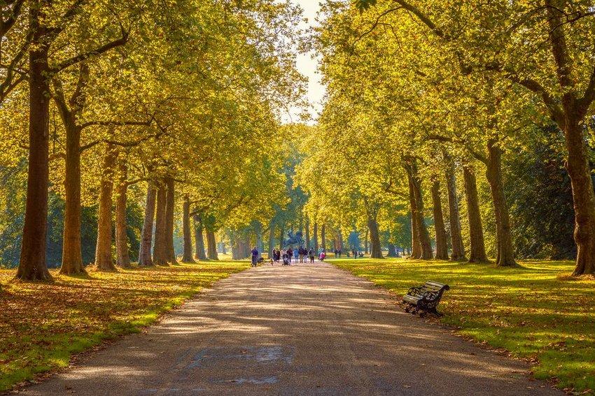 Walkway between trees in Hyde Park, London in autumn