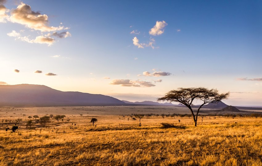 Sunset over the savanna in Kenya, perhaps what the Sahara used to be like
