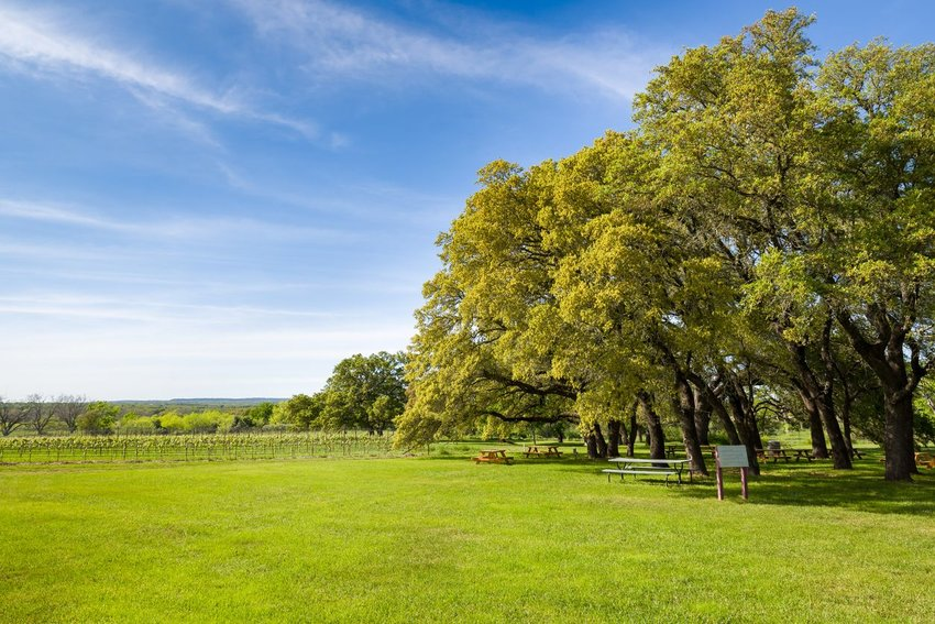 Vineyard featuring blue skies overhead and large trees in Fredericksburg, Texas