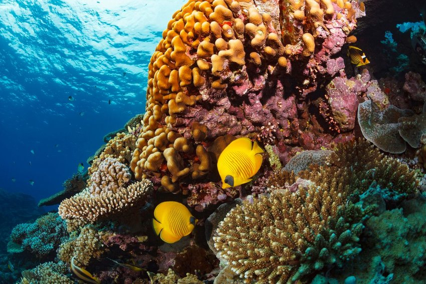 Coral reef with bright yellow fish