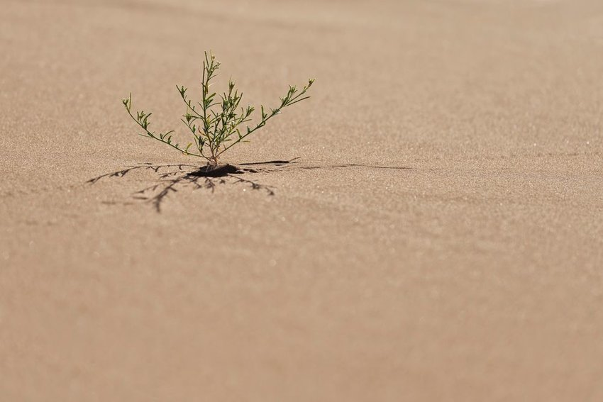 Single small plant in the Sahara desert