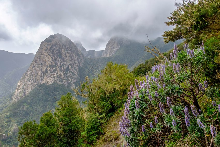 Wildflowers and mountain views in Garajonay National Park