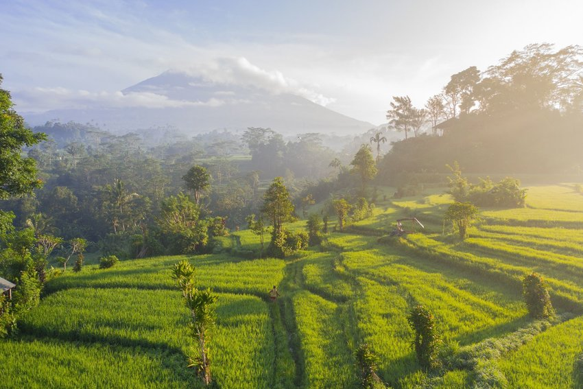 Grass fields in Bali with Mount Agung in background