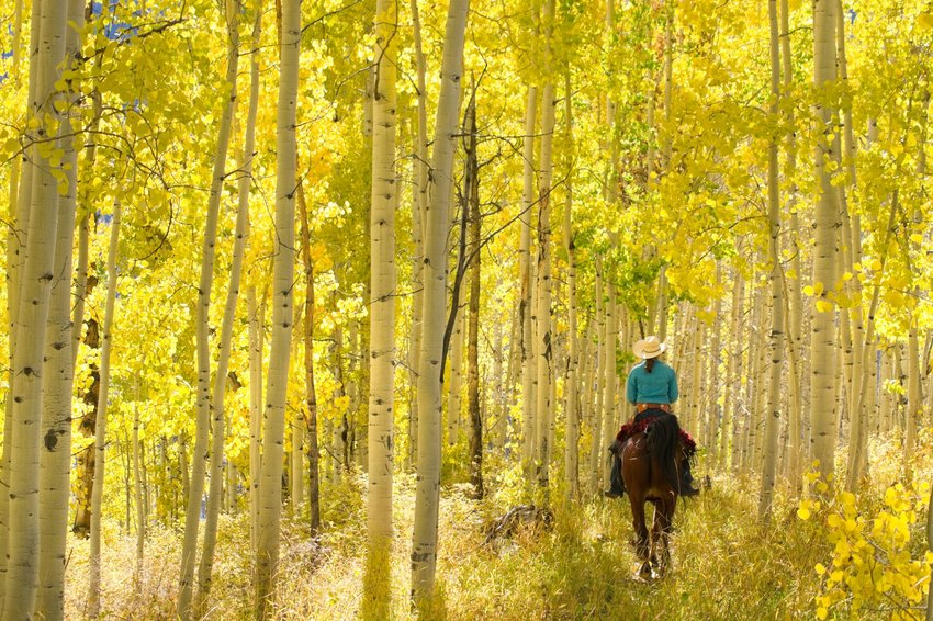 Riding a horse in the aspen trees in Colorado